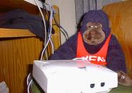 A monkey with a Dreamcast.