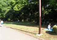 more Yoyogi park