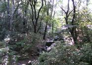 On the way to the Meiji shrine we spotted this little water stream. Somehow it looks Japanese, but why?